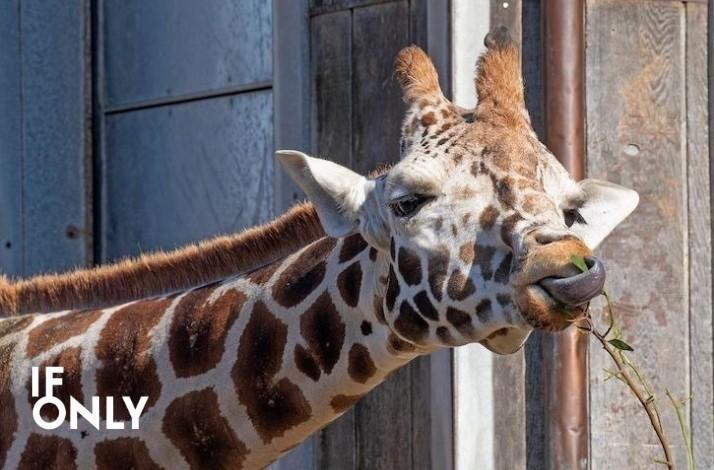 A Wild Time: San Francisco Zoo and Gardens (1)