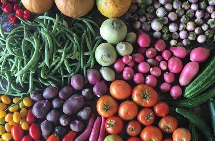 Edible Gardening Experience at Ready-to-Grow Gardens: In Miami, Florida (1)