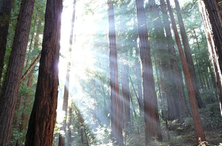 Find Your Zen on a Little Known Muir Woods Trail Led by a Seasoned Outdoorswoman: In Mill Valley, California