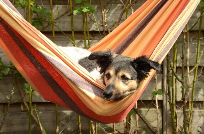 Escape to the country with your canine friend at The Mustard Seed: In Ballingarry, Ireland (1)