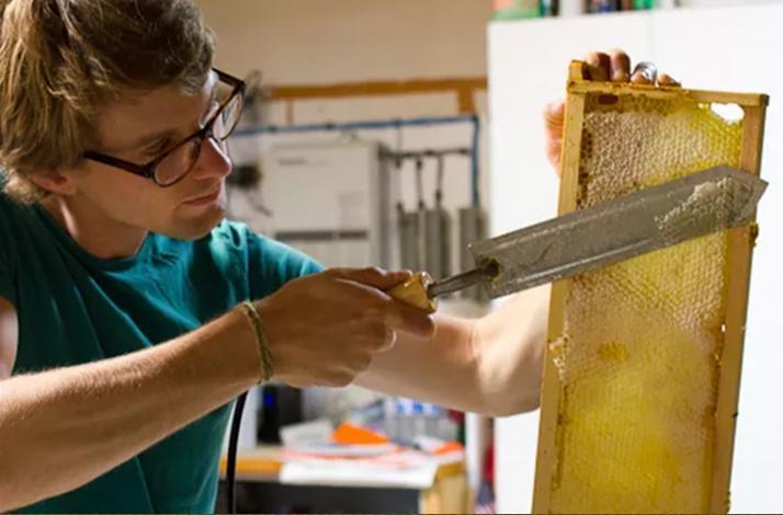 Hive to Table Honey Harvesting and Tasting: In Alameda, California (1)