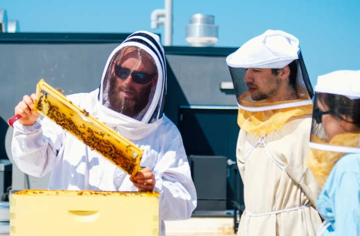 Private Urban Farm Tour & Rooftop Beekeeping with Empress Green's Founder & Head Beekeeper: In Richmond County, New York (1)