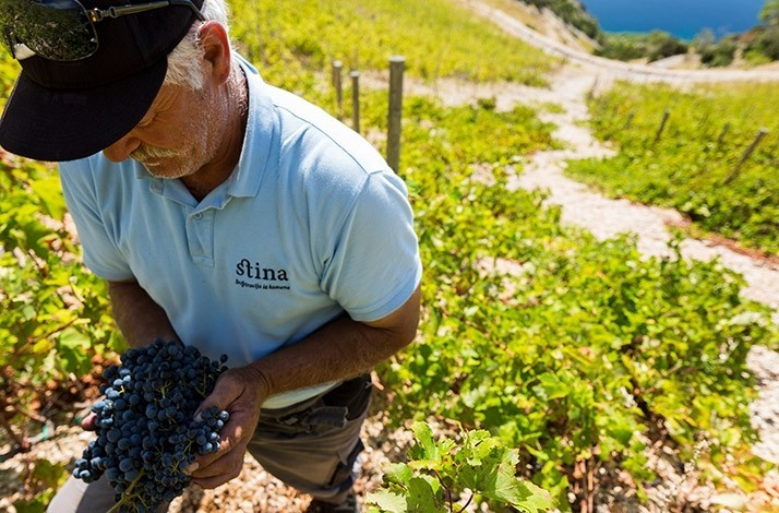 Sip wine at a closed-to-the-public mountaintop vineyard: In Bol, Croatia (1)