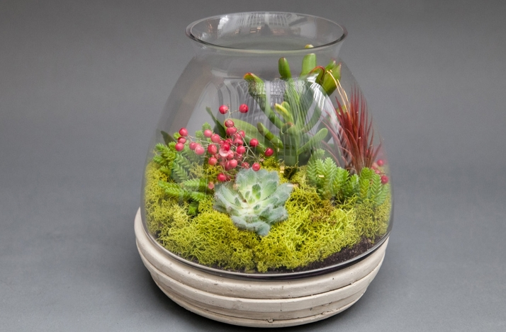 Learn to Make Terrariums in This Family Friendly Workshop with a Professional Floral Designer: In San Francisco, California (1)