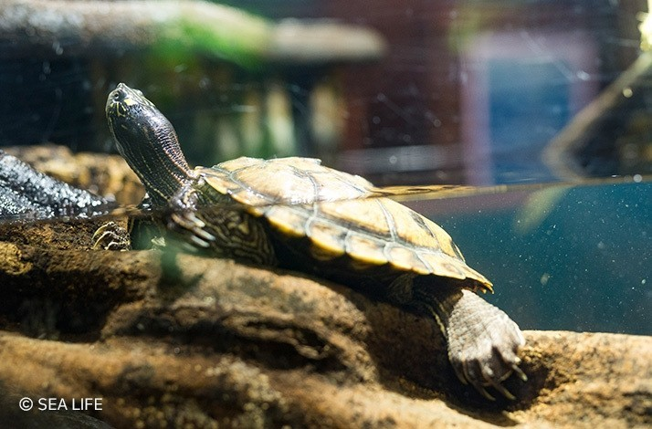Discover turtles of all sizes at SEA LIFE Munich after hours: In Munich, Germany (1)