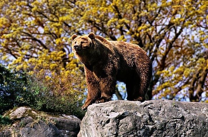 Spot Sweden's famed predators on a tour of Skansen museum's zoo: In Stockholm, Sweden (1)