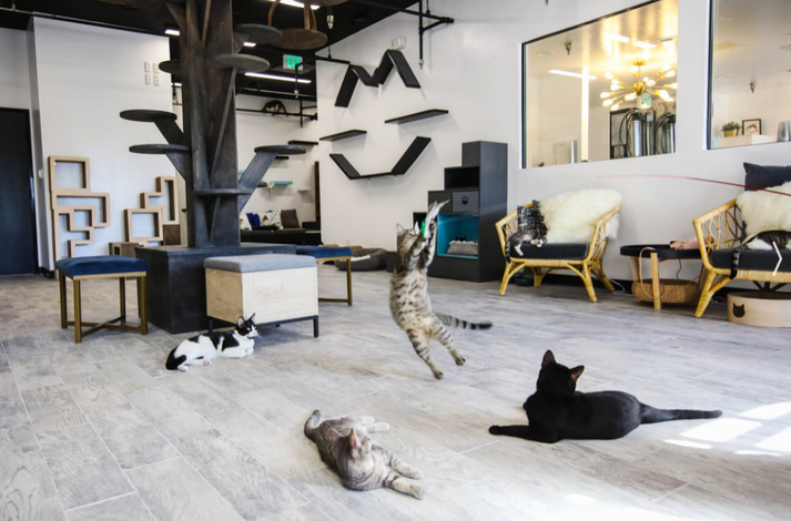 Private Cat Cafe Date Night Experience: In Los Angeles, California (1)
