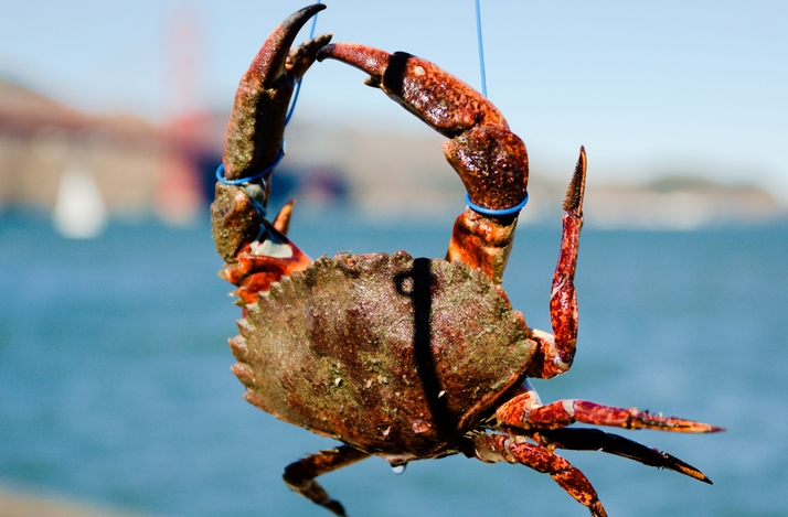 Crabbing and Crab Boil with an Experienced Fisherman off Torpedo Wharf in SF: In San Francisco, California (1)