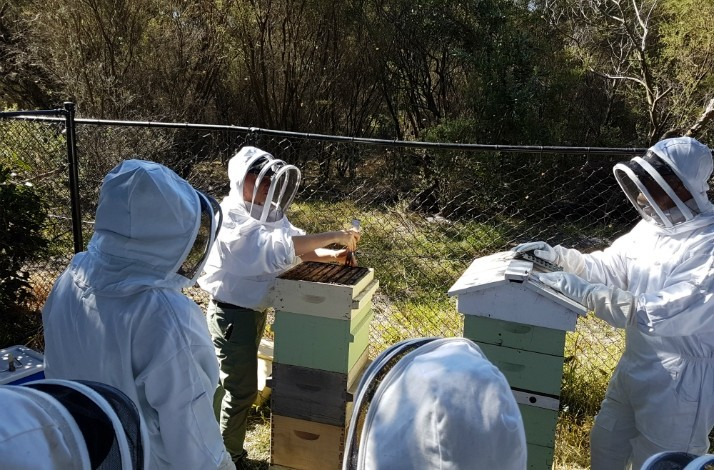 Buzz around an urban apiary during a honeybee workshop: In Sydney, Australia (1)