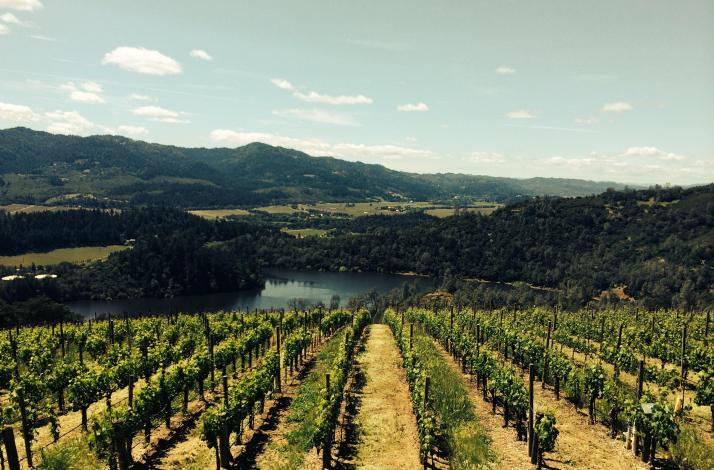 A Day in Napa Or Sonoma with a Local Certified Sommelier: In San Francisco, California