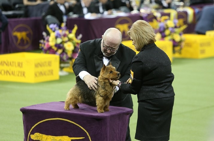 2020 Dog Show.Westminster Kennel Dog Show 2020 Show 2020