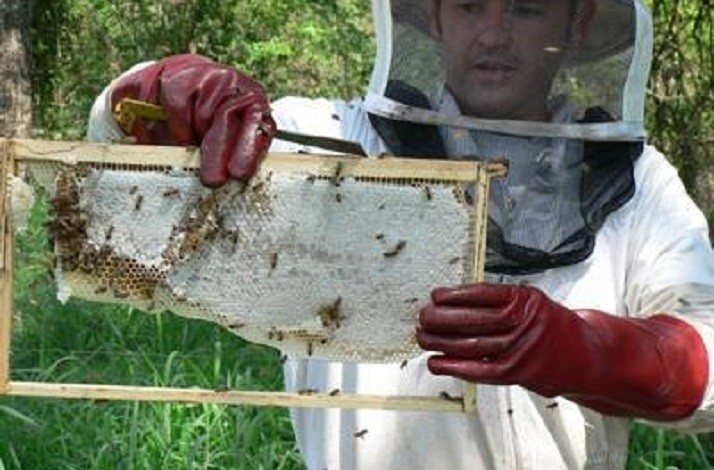 Discover the secret life of bees: In Midrand, South Africa (1)