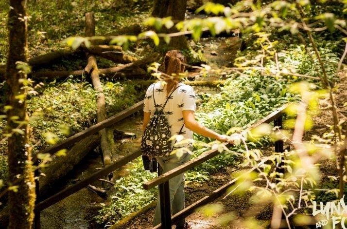 Hike through Croatia's Gorski Kotar forests with a private guide: In Delnice, Croatia (1)
