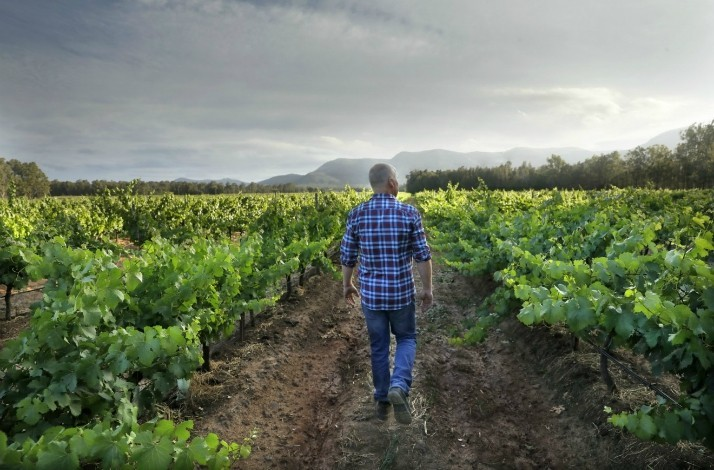 Explore Braemore Vineyard with owner and winemaker Andrew Thomas: In Pokolbin, Australia (1)