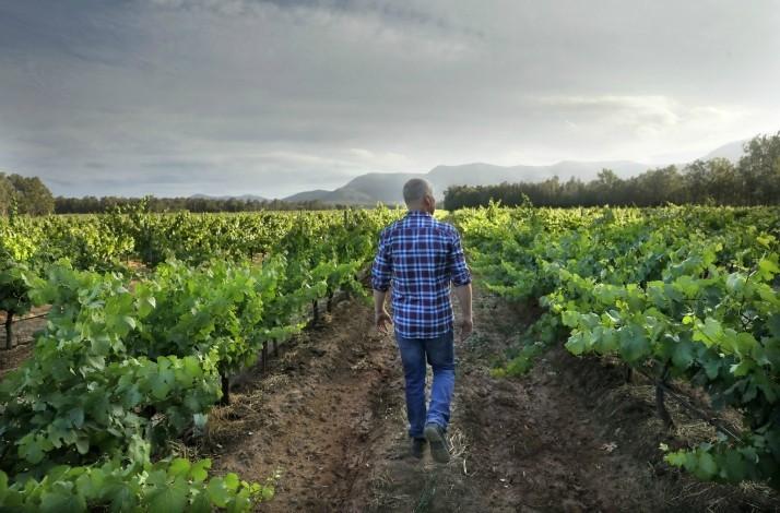 Explore Braemore Vineyard with owner and winemaker Andrew Thomas: In Pokolbin, Australia (1)