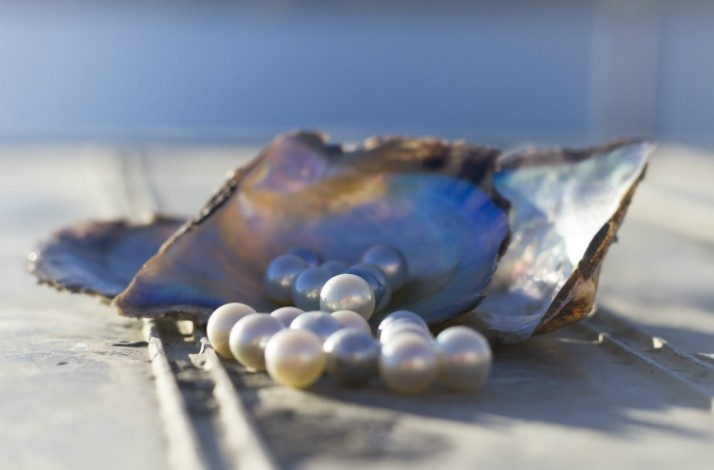 Take a pearling masterclass with Broken Bay Pearl Farm's experts: In Woy Woy Bay, Australia (1)