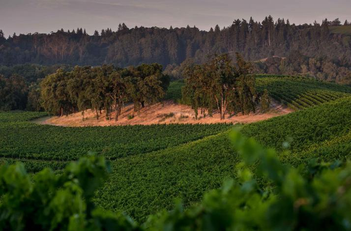 Private Vineyard Tour and Picnic Led by the Winemakers: In Forestville, California