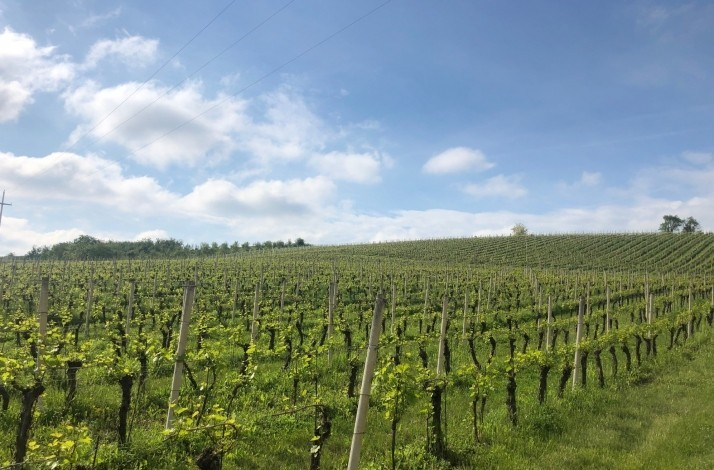 Explore the wine region of Slavonia with a two-day getaway: In Brodski Stupnik, Croatia (1)