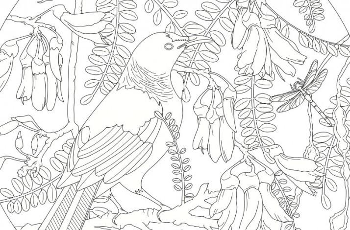 Priceless Developpez Votre Creativite Avec Le Livre De Coloriage De L Artiste Jenny Haslimeier In Auckland Nouvelle Zelande