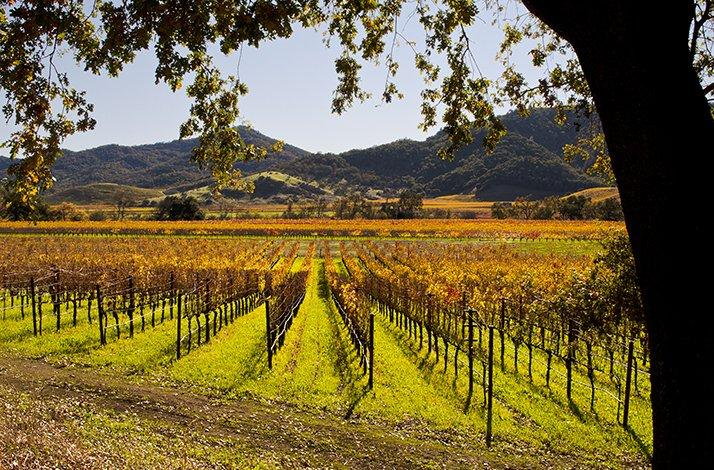 Bike Ride and Epicurean Adventure through Napa Valley: In Yountville, California (1)