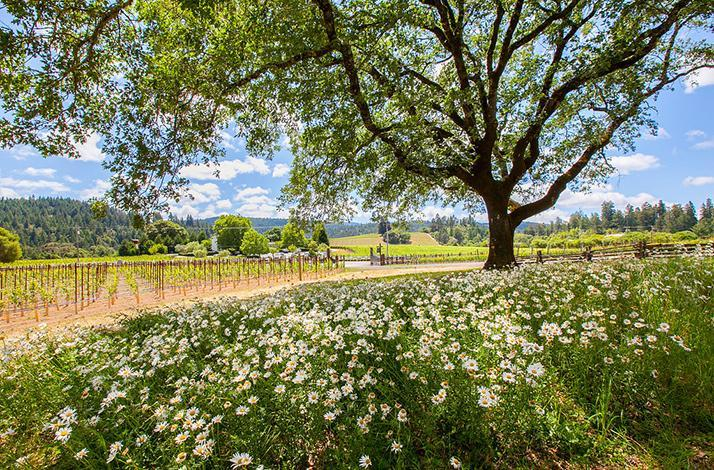 Anderson Valley Getaway Private Vineyard Tour with Luxurious Accommodations and a Special Dinner: In California, United States (1)