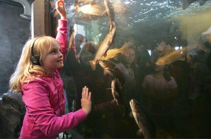 Breakfast Time at the Aquarium: a Private Fish Feeding Encounter: In Monterey, California