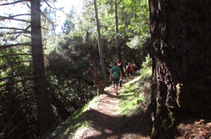 Exclusive Fitness Trail Experience at Armstrong Woods: In Guerneville, California (1)