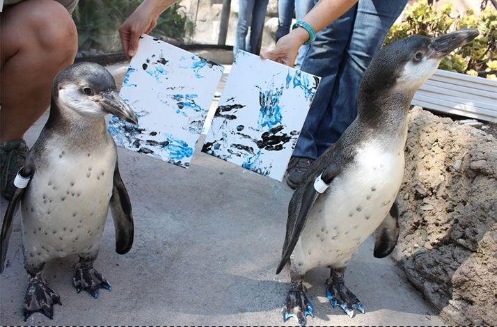 Creative Animal Art Session at the Santa Barbara Zoo: In Santa Barbara, California (1)