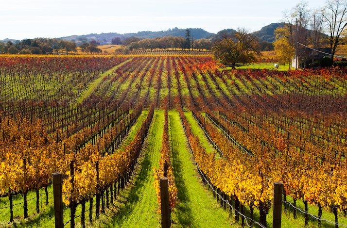 Private Tour of 3 Legendary Oakville Wineries Through the Eyes of a World-Famous Sommelier: In Napa, California (1)