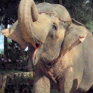 Responsive image Tais Elephant Preserve