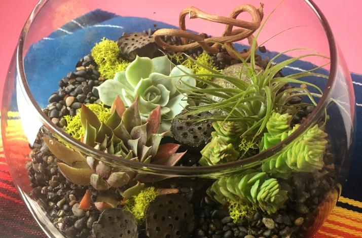 Private Succulent and Tillandsia Terrarium Class : In San Francisco, California (1)
