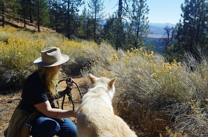 Guided Hike with Ambassador Wolves: In Frazier Park, California (1)