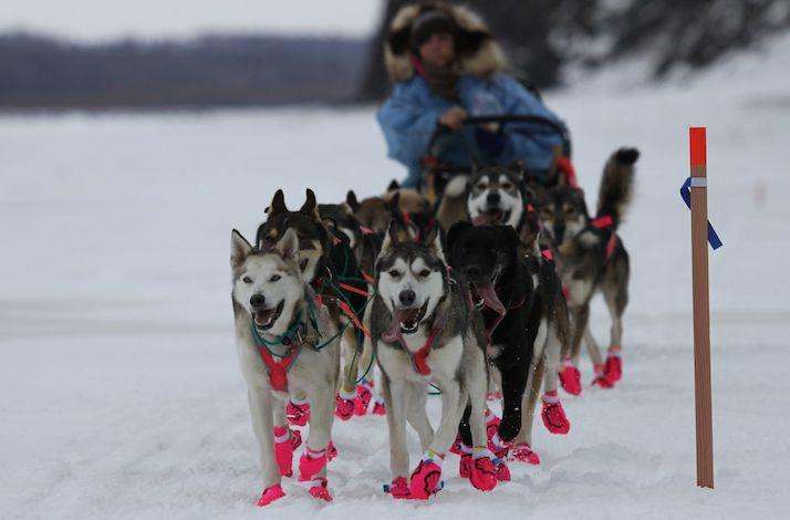 Overnight Alaskan Dogsled Expedition with an Iditarod Legend: In Anchorage, Alaska