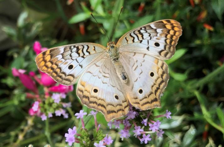 Butterflies and Blooms on Mother's Day: In San Francisco, California (1)