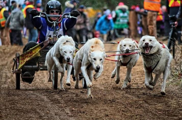 Learn How to Ride a Racing Rig with a Team of Alaskan Husky Sled Dogs: In Hampshire County, Massachusetts (1)