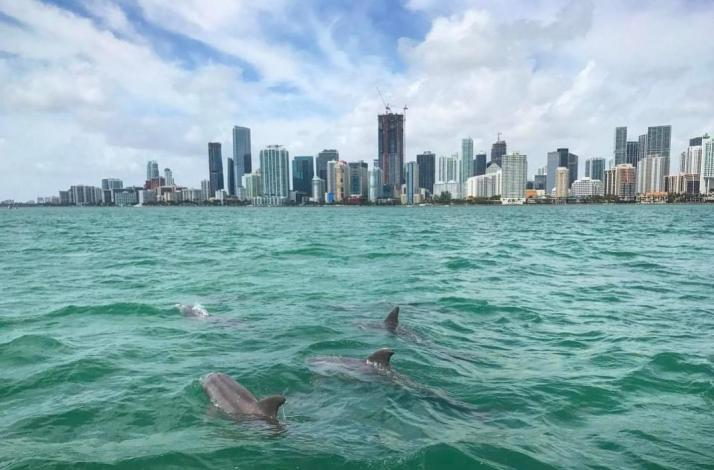 Experience Miami by Water: In Miami Beach, Florida (1)
