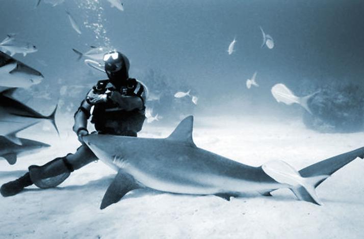 Rhode Island Mako Shark Diving Experience: In Little Compton, Rhode Island (1)