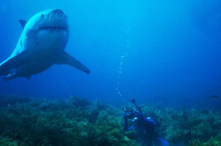 Great White Watching off the Coast of San Francisco with Legendary Diver Jeremiah Sullivan: In San Francisco, California (1)