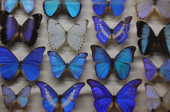 Butterfly Conservatory Tour at the American Museum of Natural History: In New York, New York (1)