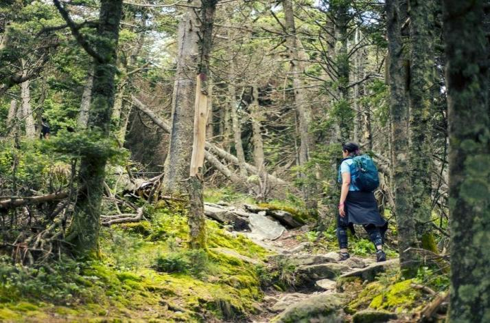Guided Hike Through Forever Wild Old Growth Forest Untouched by Man: In Phoenicia, New York (1)