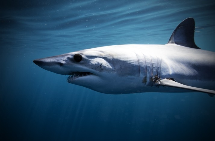 Dive into the Depths of the Ocean and Swim with Whales, Sharks and Other Wonderful Species: In La Paz, Mexico (1)